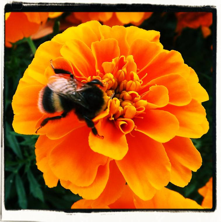 Mr Bumble Bee: Summer Flowers To Make You Smile