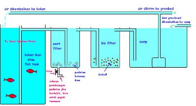Cara Membuat Filter Kolam Akuaponik