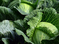 Benefits of Cabbage for Your Health