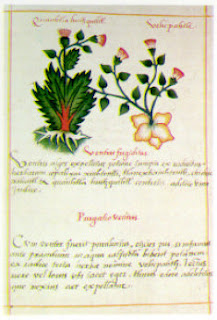 Códice Badiano