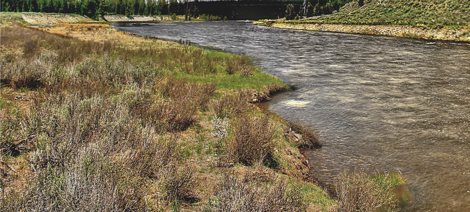 Fly fishing in yellowstone national park for Yellowstone fly fishing