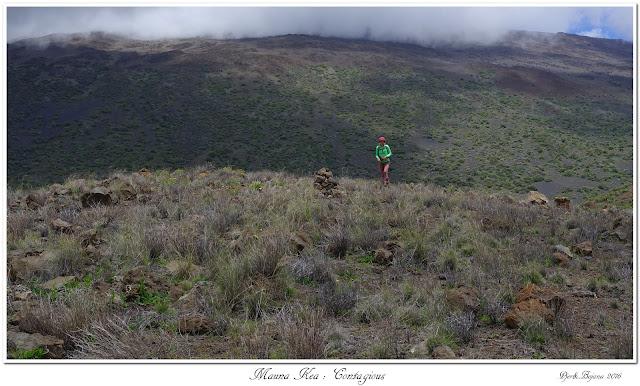 Mauna Kea: Contagious
