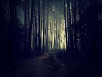 photo of gloomy forest
