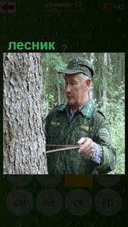 лесник измеряет объем дерева линейкой в форме в лесу