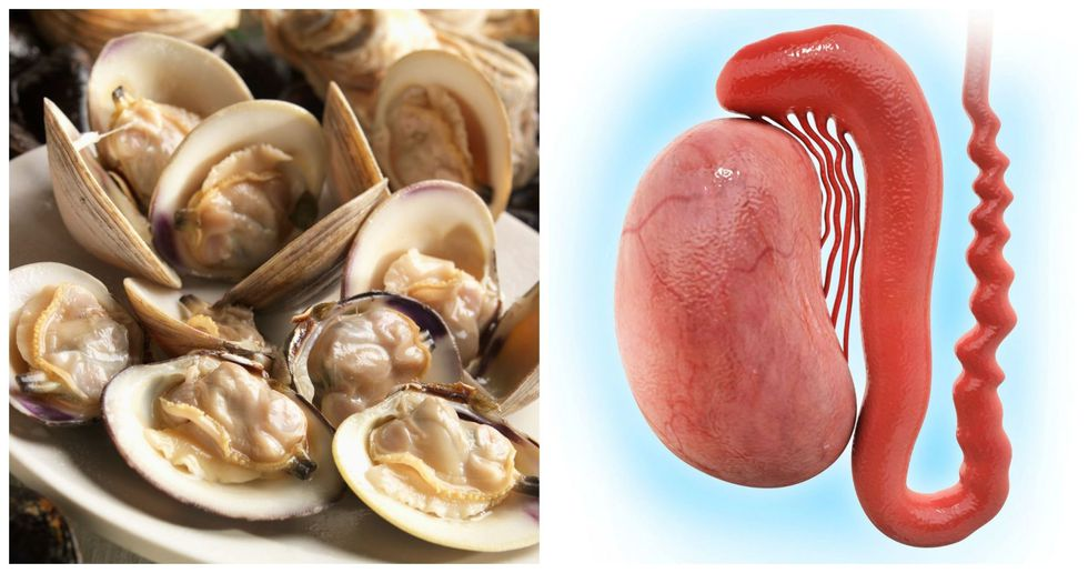Clams, Testicles
