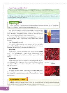 6. Sınıf Fen Bilimleri Ders Kitabı Cevapları Sevgi Yayınları Sayfa 62