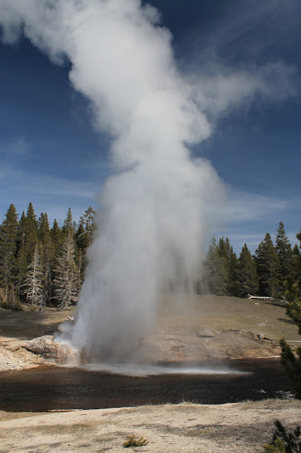 Yellowstone National Park Wyoming Idaho Montana geology travel field trip bison buffalo elk river geyser copyright RocDocTravel.com
