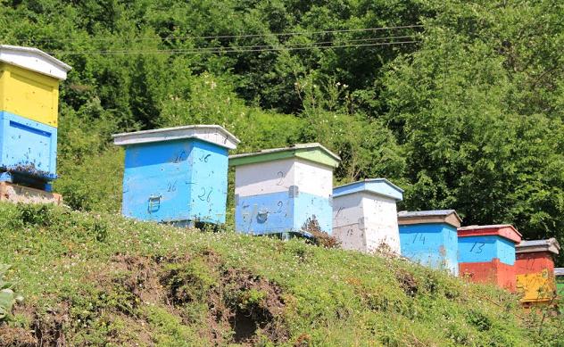5 μέτρα για καλό ξεχειμώνιασμα των μελισσιών μας