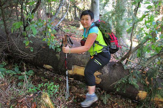 Jedno z drzew powalonych przez wichurę.