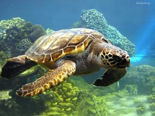 La Tortuga Marina Marine Turtle Los Animales Acuáticos The