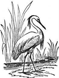 95+ Jenis Gambar Burung Bangau Kartun Inspiratif