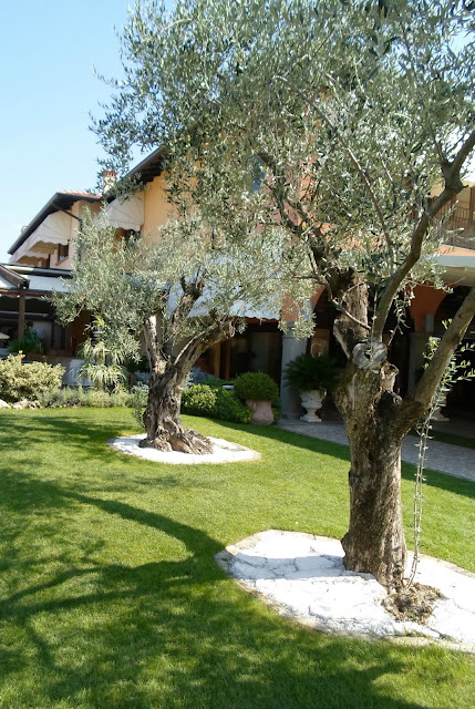 Restaurant Garden with Olive Trees