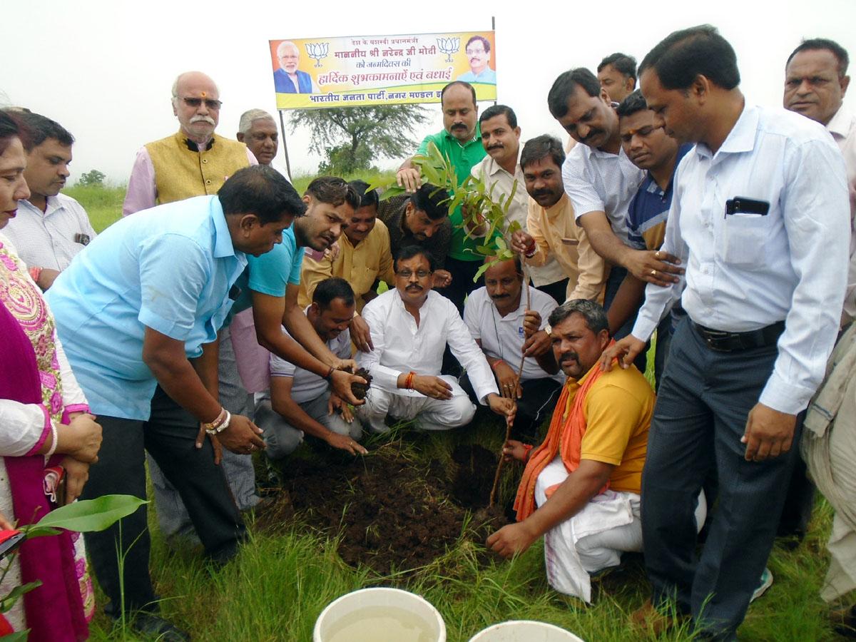 Jhabua News-भाजपा ने सेवा सप्ताह में हाथीपावा पर नरेन्द्र मोदी के जन्मदिन पर 125 पौधों का रोपण किया