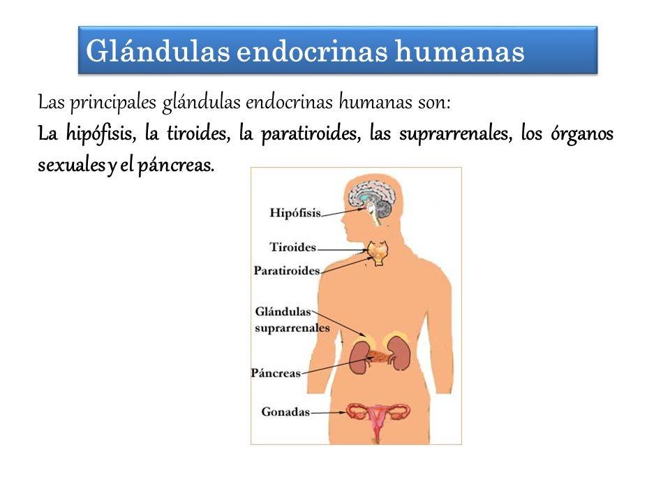 BiologíaNavaMuñoz: SISTEMA ENDOCRINO Y SUS COMPLEJIDADES