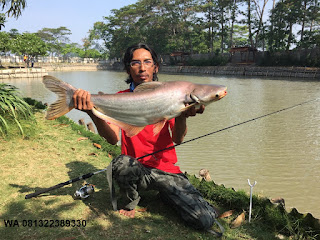 Umpan Pelet Serbuk Ikan Patin Di Musim Panas