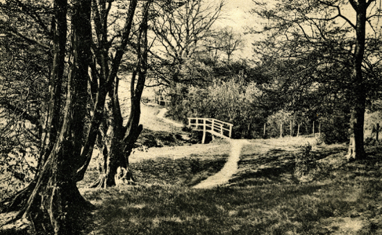 Photograph on a postcard of Potterells Park 1900s. Image from Peter Miller's collection