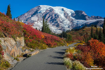 Mount Rainier above the bright red meadows of Paradise Park in fall, Mount Rainier National Park, Washington.