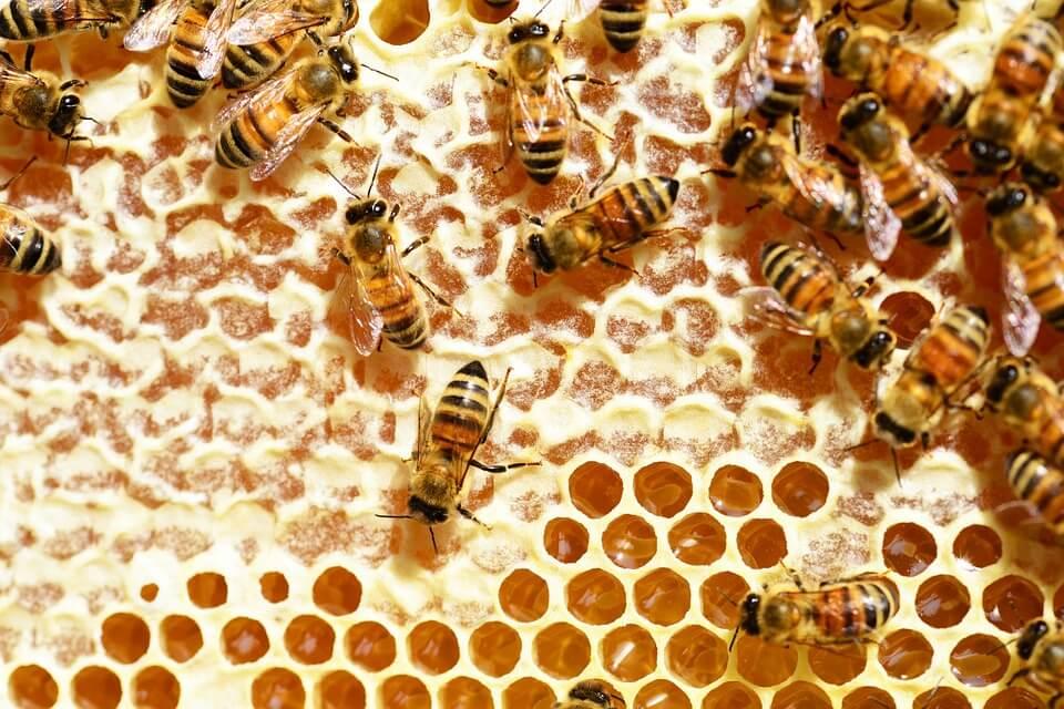 Manfaat dan Khasiat Propolis (Sarang Lebah)