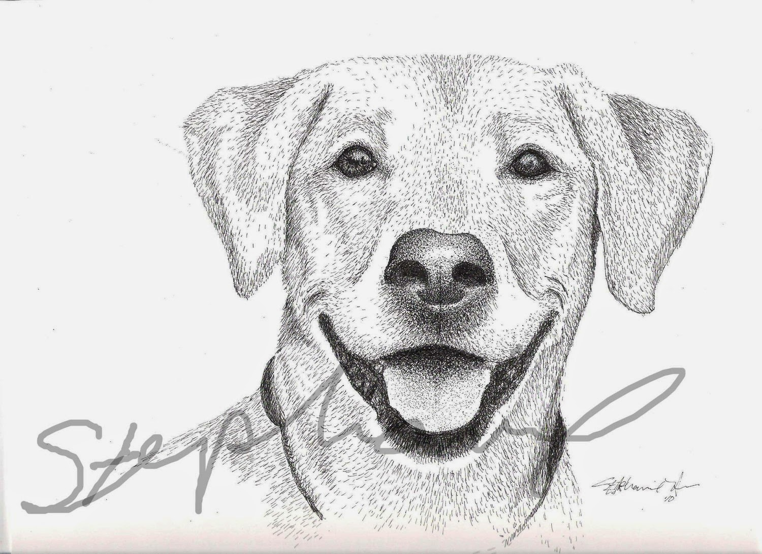 Rules Of The Jungle Sketch Drawings Of Dogs