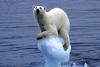 Derretimento de Geleiras, Aumento do Nível do Mar, Extinção de Animais, Sustentabilidade, Aquecimento Global