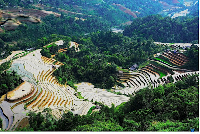 Hoang Su Phi - famous destinations with terraced fields in rainy season