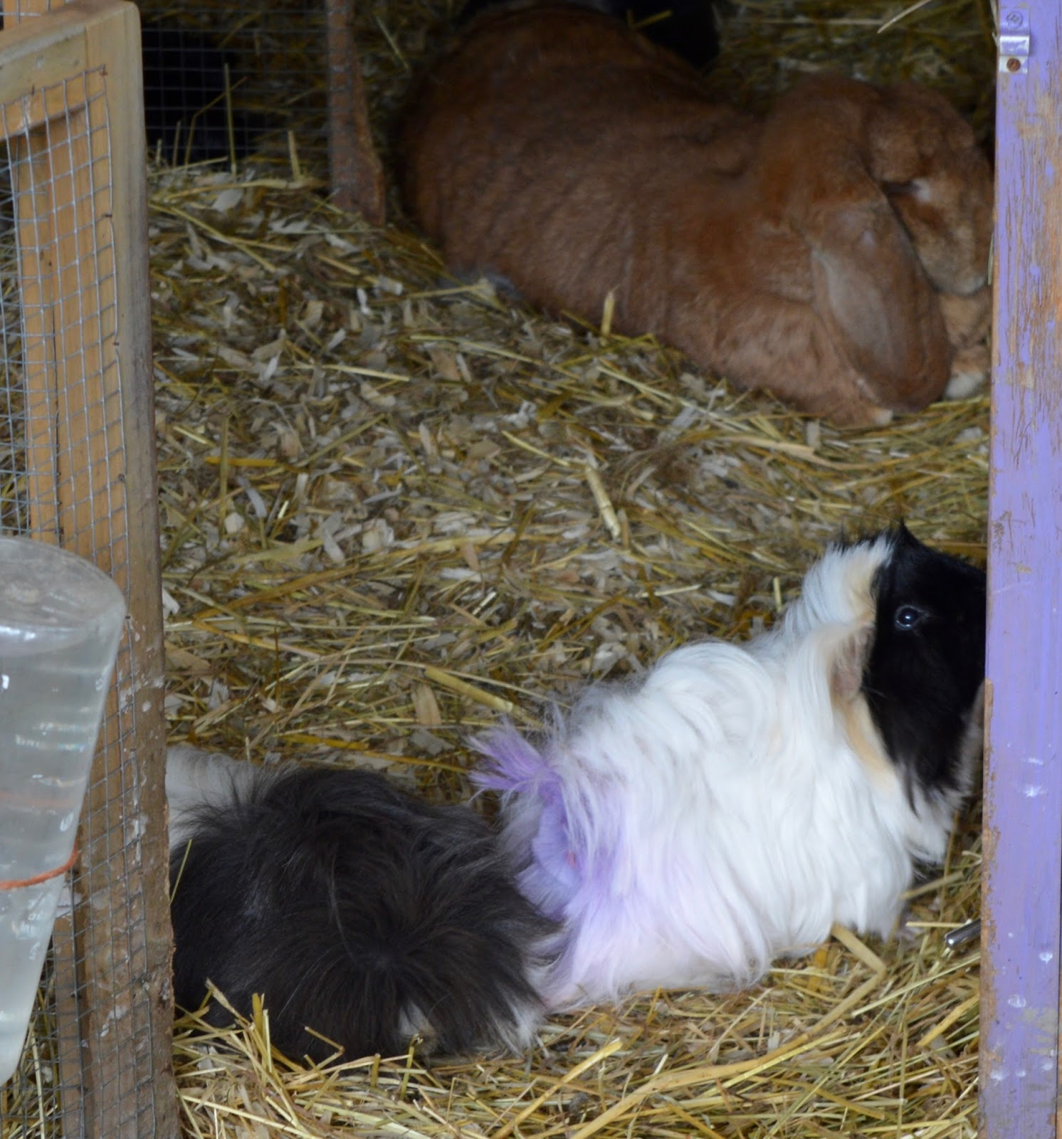 Ouseburn Farm Newcastle | A FREE Place to Take the Kids - guinea pigs and rabbits
