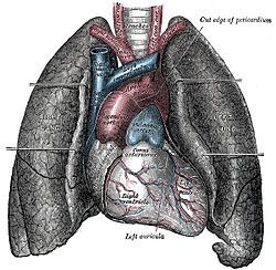 Makanan-Makanan yang mampu meningkatkan kapasitas paru-paru
