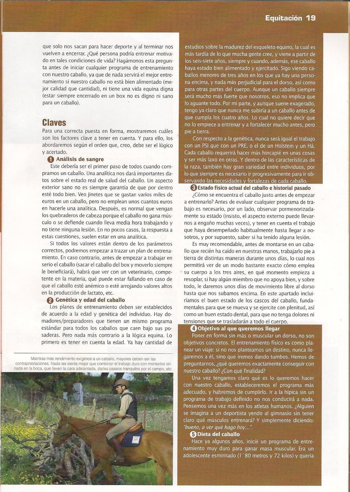 Tomás Mateo_Entrenamiento Equino: 8 claves para la puesta en forma ...
