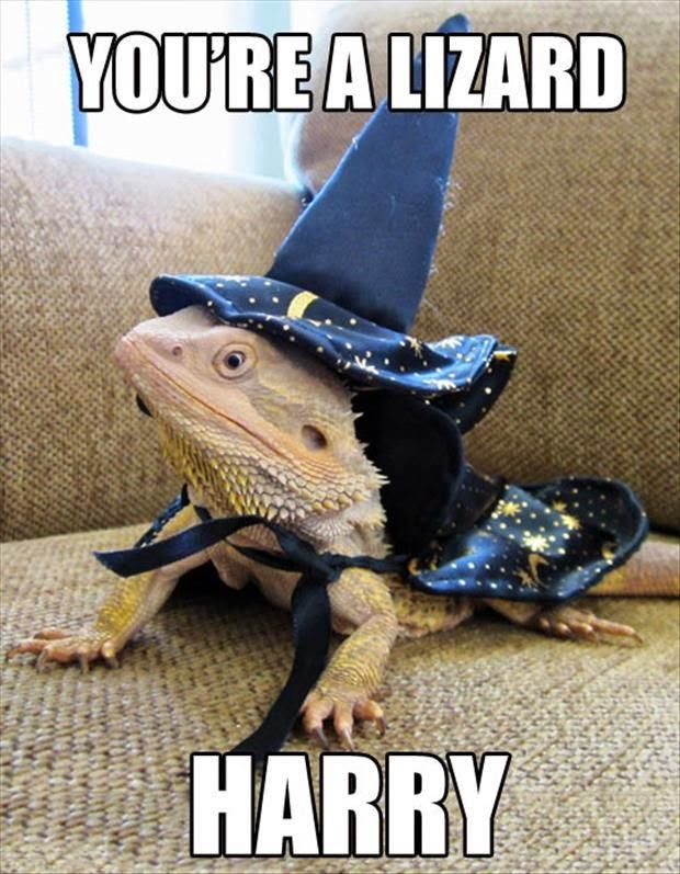 Funny you're a lizard Harry pun joke picture