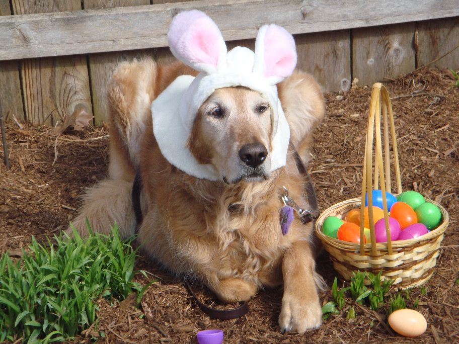 A Dogs Life The Real Story Getting Ready For Easter