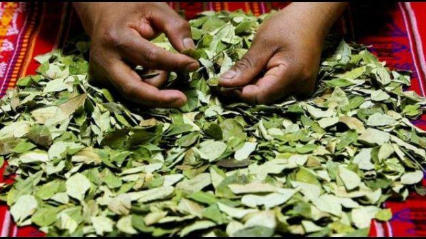 Bolivia en la lista negra de productores de cocaína según EEUU / WEB