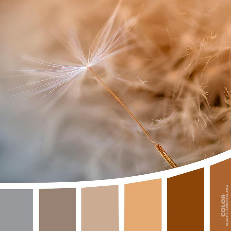 color_418
