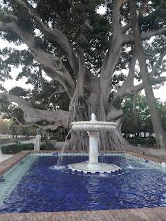el árbol de la Alameda Apodaca