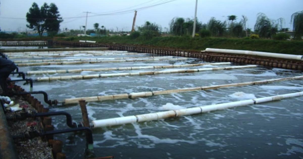 Xử lý nước thải trong chăn nuôi bằng ô xi hóa