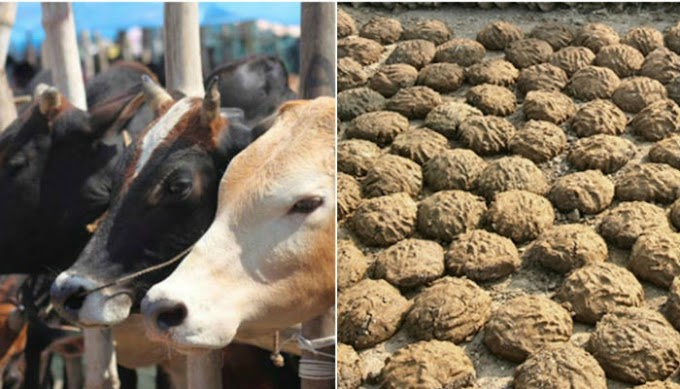 A Sacred Vedic Tradition from a Scientific Angle of Cow Dung