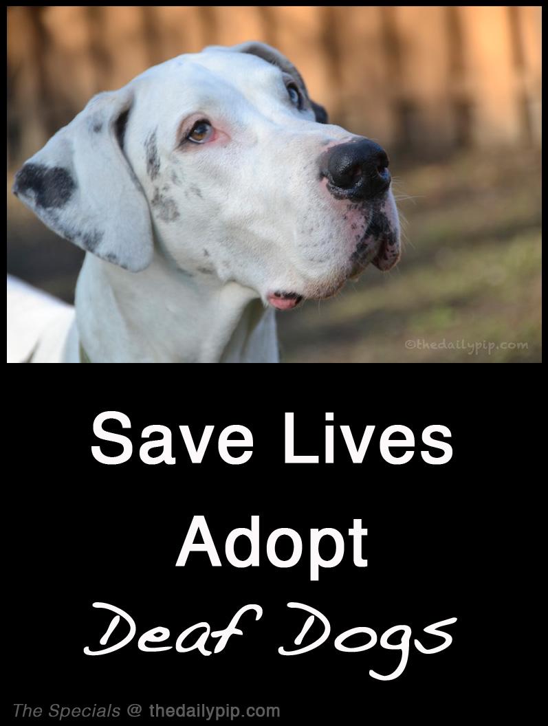adopting a deaf dog