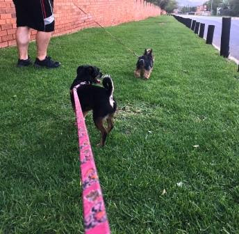 Dogs walking their Humans