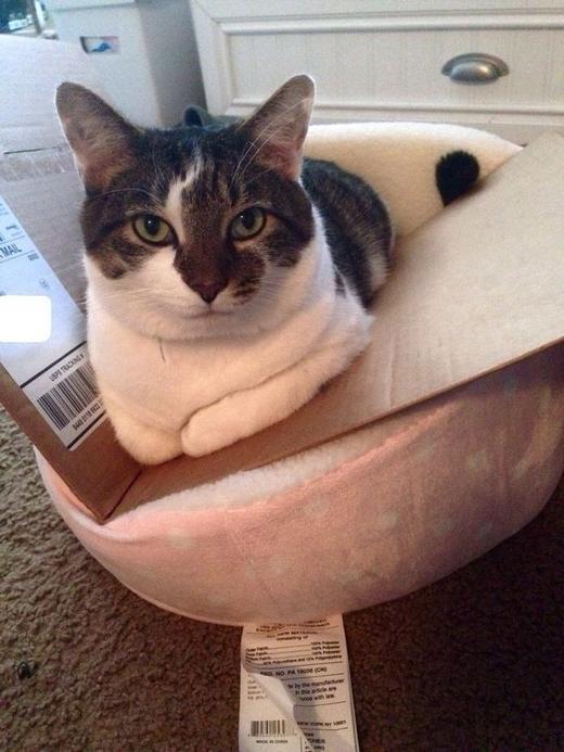 Смешной кот и новая лежанка - как заманить