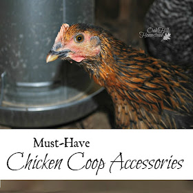 Must-Have Chicken Coop Accessories