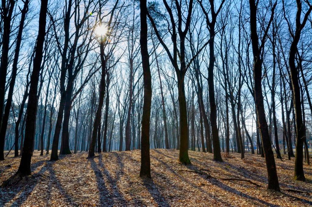 Kányádi Sándor, erdélyi költészet, vers, vers-szombat, Valaki jár a fák hegyén