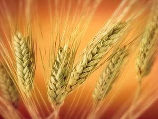 Kapalı Tohumlu Bitkiler Nelerdir?