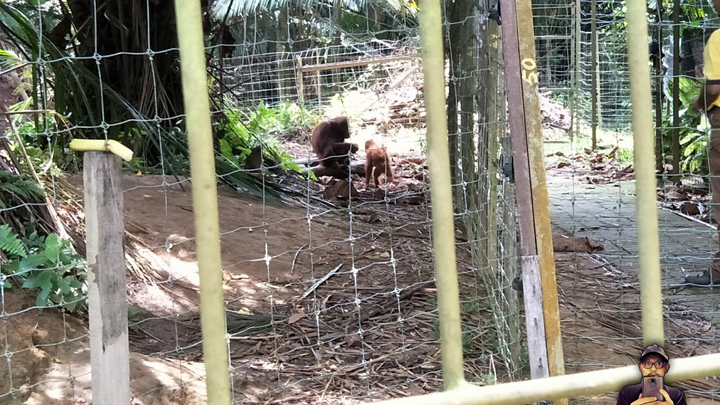 SIF2017 - Pulau Orang Utan, Bukit Merah Laketown Resort
