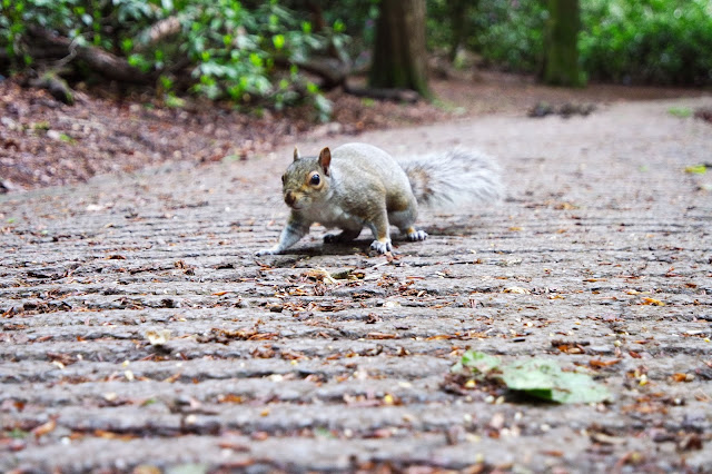 squirrel stood on a park pathway