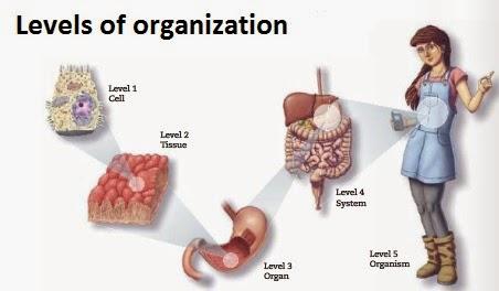 How Do Multicellular Organisms Get Food