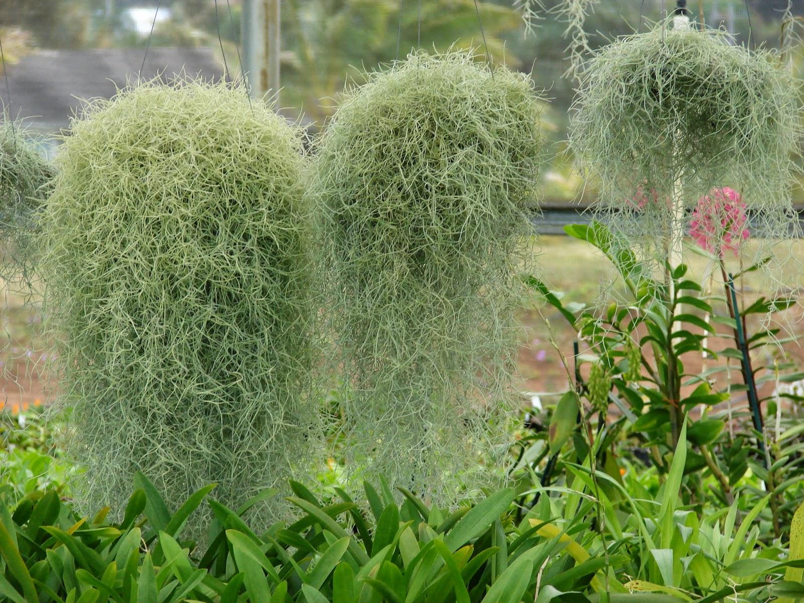 PlantWerkz