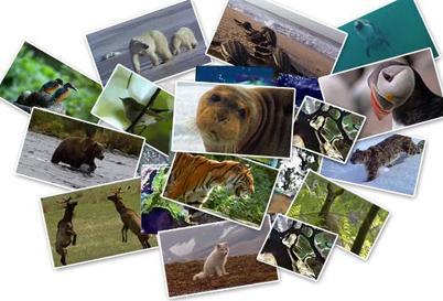 http://enseigner.tv5monde.com/collection/les-animaux-racontent
