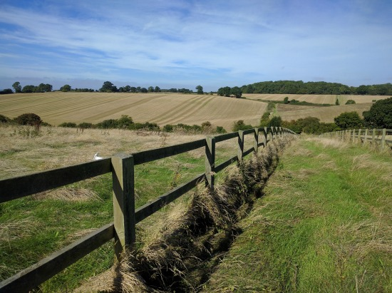 Photograph of footpath, fences and fields along Walk 59: The Burn's Green Loop