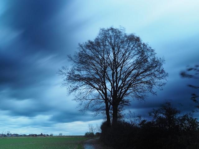Ein Baum an einer Straße. Im Hintergrund der Ort Leopoldshöhe
