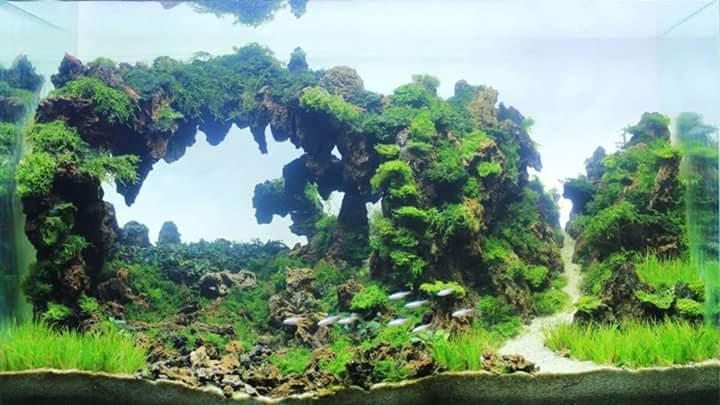 Bố cục hồ thủy sinh cầu vòng rất đẹp