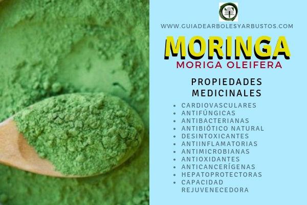La Moringa, Moriga oleifera, tiene Propiedades Medicinales: Cardiovasculares, Antifúngicas, Antibacterianas entre otras